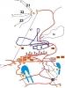 Схема спорткомплексу Тисовець